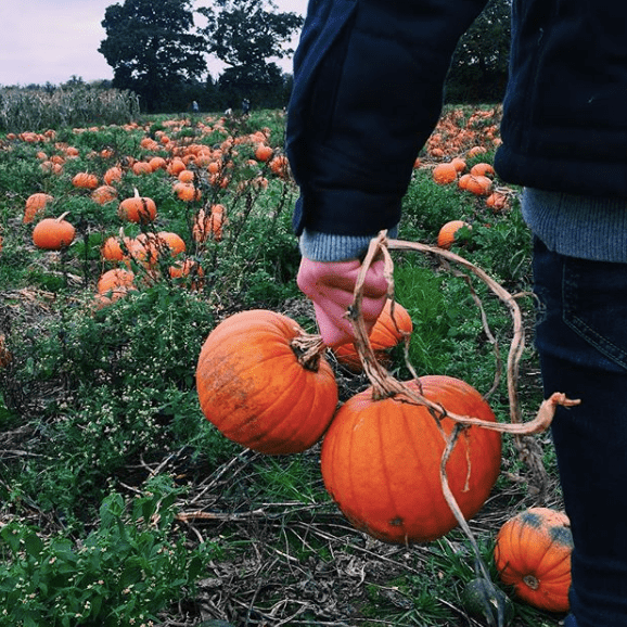 pumpkin picking 2017